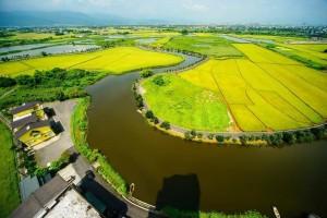 溼地裡的農業實驗 他的稻田有河蚌、有水鳥還有鱔魚