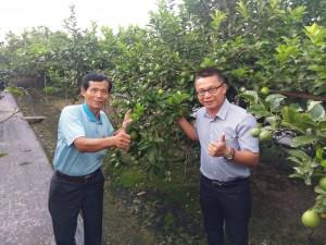 有產銷履歷的檸檬 這村9成農民都申請了
