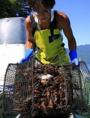 中國人超愛吃小龍蝦... 在日本被踩碎當肥料了!