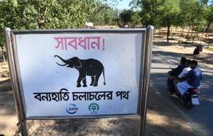 4洛興雅難民 遭孟加拉野象殺害