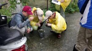 鶯歌這條「採筍路」 1個月害7人染登革熱