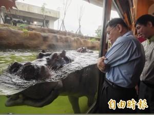 「河馬浴場」落成 近距離接觸巨型草食獸