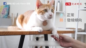 除了賣萌還能做什麼?「 貓咪肉墊」大解密!