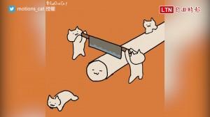 每天都要來點貓能量 網友被萌翻:「這圖有毒!」