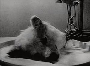 《怪物》真實上演?蘇聯科學家 讓「狗頭」復活