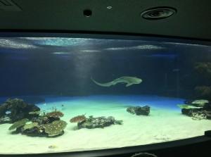 員工一個疏失... 日本水族館1235隻魚斷氣死亡