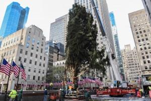 洛克菲勒中心選23米雲杉 5萬盞燈妝點第86棵耶誕樹