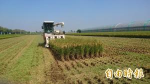 台南二期稻價遠低於去年 稻價回不去了