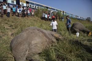 成群過鐵路覓食 印度2大象遭火車撞死