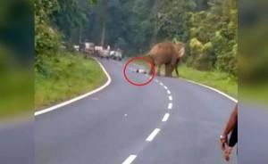 公路上有大象! 男子興奮自拍 沒想到被一腳踩死