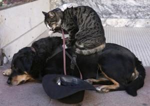 喵星人抱歉了... 國際研究:狗比貓聰明