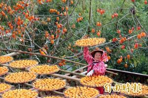 柿子爆量 柿餅加工將延長到明年2月