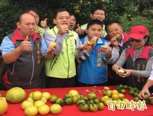 花壇柑橘類水果盛產 現在吃正是時候