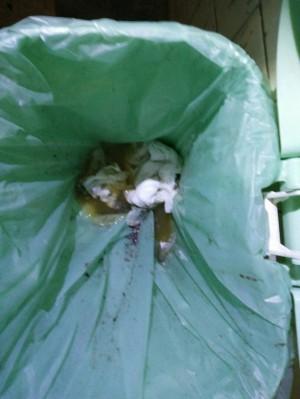 突擊路竹龍發堂環境衛生 垃圾桶有排泄物臭氣四溢