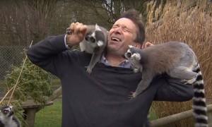 播報到一半遭狐猴群攻擊 BBC記者反應萌翻網友