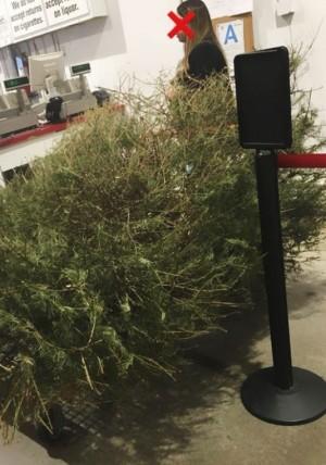好市多最扯奧客  過完節退耶誕樹、怨「它死了」