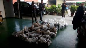 山老鼠8人集團盜牛樟 警揪幕後生技公司為了養牛樟菇