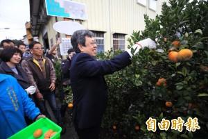 陳建仁視察茂谷專業區   農友怨:「被馬英九騙兩次」