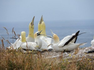 只向水泥雕像求偶 世界上最孤獨的鳥兒逝世