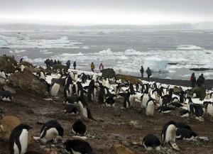 中國禁止人民摸企鵝 違者3年內不能去南極