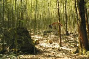過年走春 森林遊樂區推多項活動迎新年