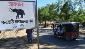 野生大象闖羅興亞難民營  2童遭踩死、30人受傷