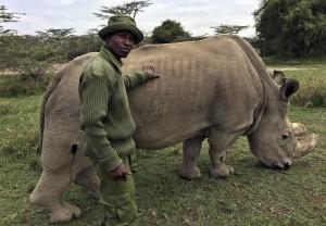 全球僅存公北白犀 最後的「蘇丹」健康惡化
