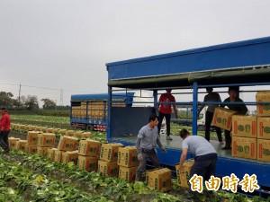 北農連休菜價崩跌 農委會怒嗆:北市府出來說清楚