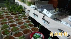 比特幣網購種子學種大麻  收成時GG了