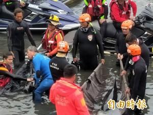 小虎鯨胃內驚見18個塑膠袋 網:人類對不起你們