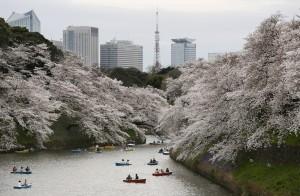 60萬中國人預計去日本賞櫻  強國網友全都崩潰了