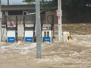 昆士蘭豪雨成災   水中驚見鱷魚、鯊魚