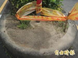 紅火蟻入侵新竹高鐵特定區域 竹北公所忙防治
