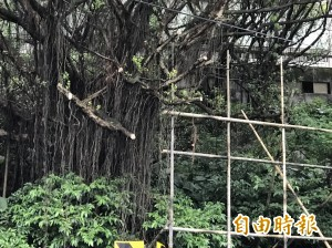 架選舉廣告鷹架竟砍路樹、堵水孔 基隆人怒了!