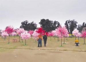 中國「櫻花海洋」造假 買票觀賞全是塑膠花