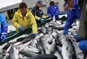解禁! 俄開放日本水產品進口 福島產品有條件輸入