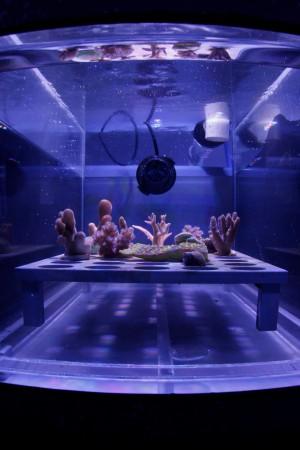 澳洲研發珊瑚救星 超薄遮陽膜防白化