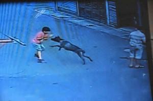 比特犬咬傷男童 飼主最高可罰15萬