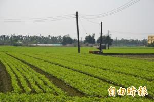 國土計畫完成 農地大減10多萬公頃剩81萬公頃