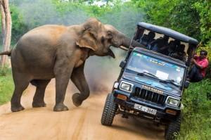 猛象有戰力!強攻吉普險弄翻車 乘客尖叫嚇哭