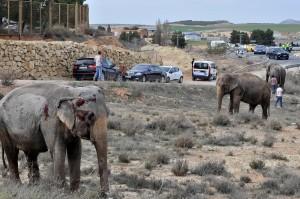 馬戲團車翻覆 大象1死4傷 動保人士撻伐