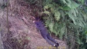 閻王拒收  婦人開車衝下邊坡、跳崖幸運獲救