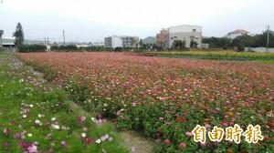 吸年輕人回流!竹北爭取西區劃設600公頃休閒農業專區