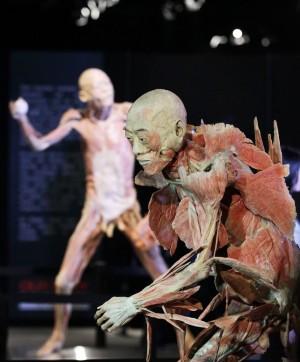 知名人體展覽  遺體來源被爆來自中國死亡政治犯