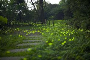在台北搭捷運就能賞螢 和美山螢火蟲季開始了!