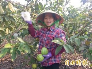 愛台灣的芭樂!越南新住民種出美味水果