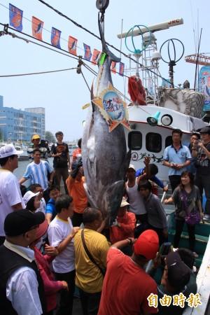 屏東「第一鮪」傳現身 魚來滿6號快馬加鞕回東港