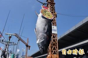 「屏東第一鮪」黑鮪魚拍賣創天價 每公斤8600元