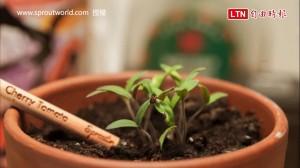 丹麥最夯療癒小物 這枝鉛筆可以種出「花」來!