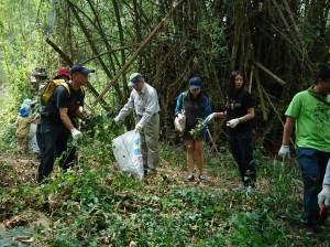 中市外來入侵植物教育訓練活動 清除500公斤銀膠菊